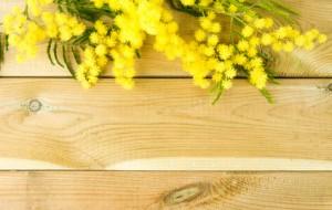 A la découverte du mimosa et autres plantes à parfum