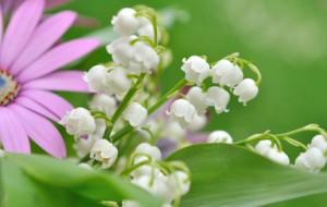 Les senteurs du printemps