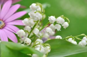 brins de muguet dans bouquet de fleurs sur fond vert