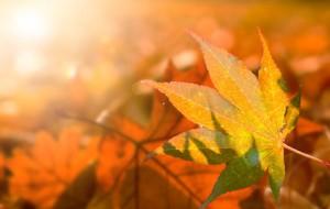 Les fragrances de l'automne sur fond d'été indien