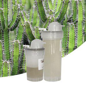 Parfum Cactus aquatique