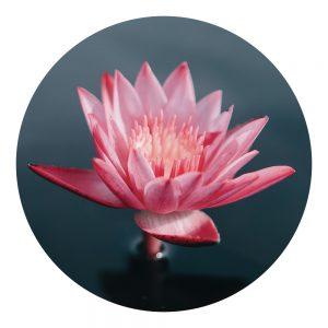 Parfum Lotus Zen