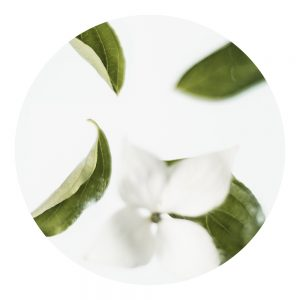 Parfum Thé blanc